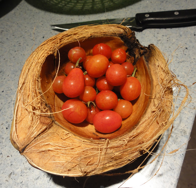 la diva cucina team building garden tomatoes